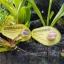 Avocado Natural Sunscreen ครีมกันแดด อะโวคาโด้ thumbnail 2