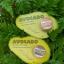 Avocado Natural Sunscreen ครีมกันแดด อะโวคาโด้ thumbnail 1