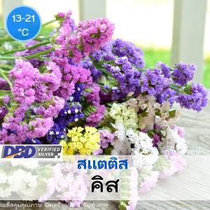 ไม้ตัดดอก สแตติส คิส (kiss series) 1.09-1.30 บาท/เมล็ด