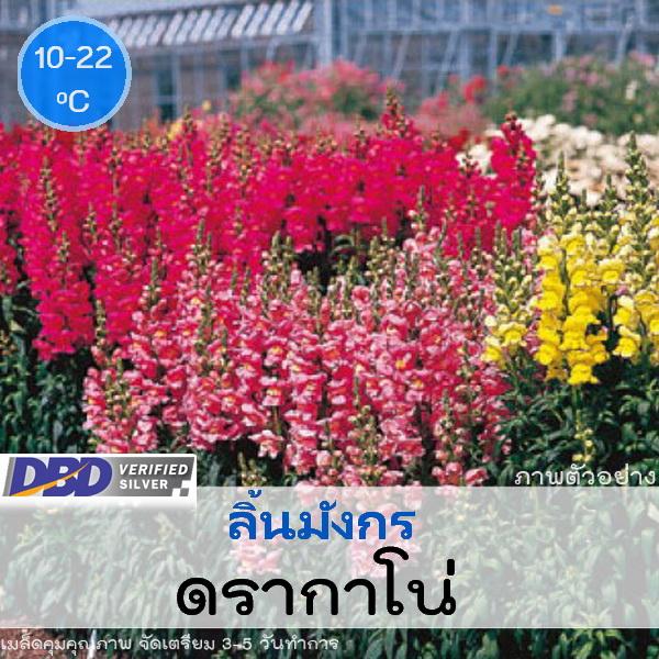ลิ้นมังกร ดรากาโน่ (Dragano Series) 1.09-1.60 บาท/เมล็ด