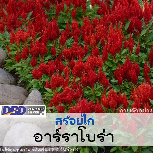 สร้อยไก่ อาร์ราโบน่า เรด (Arrabona Red) 1.34 - 1.55 บาท/เมล็ด