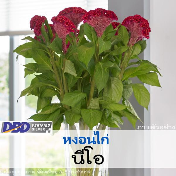 ไม้ตัดดอก หงอนไก่ นีโอ (Neo Series) 3.49 - 3.70 บาท/เมล็ด