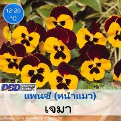 แพนซี เจมา (Jema Series) 1.09 - 1.3 บาท/เมล็ด