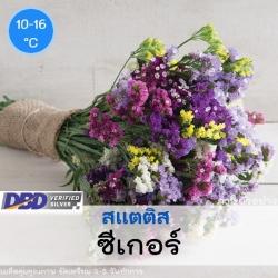 ไม้ตัดดอก สแตติส ซีเกอร์(Seeker Series) 0.74-1.50 บาท/เมล็ด