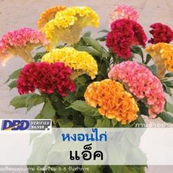 ไม้ตัดดอก หงอนไก่ แอ็ค (Act Series) 3.49 - 3.70 บาท/เมล็ด