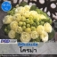 ไม้ตัดดอก ลิซิแอนธัส โครม่า(Croma Series) 2.39-2.60 บาท/เมล็ด